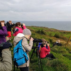 Wildlife Holidays on Ireland's Wild Atlantic Way