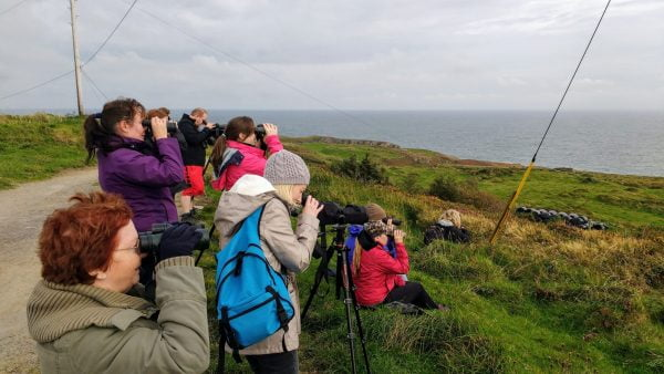 Wildlife Holidays on Ireland's Wild Atlantic Way