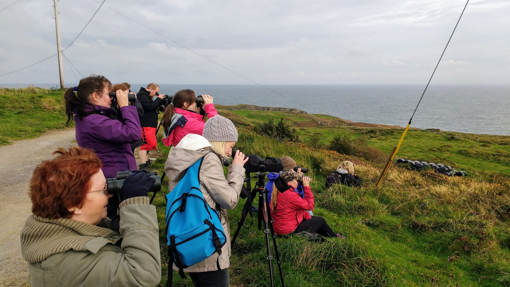 Ireland's Wildlife Tours COVID-19 Update