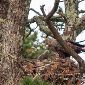 Wildlife Short Breaks