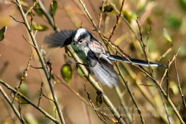 Birding breaks on Ireland's WIld Atlantic Way