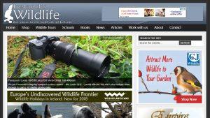 Ireland's Wildlife: get closer to the wild side of Ireland