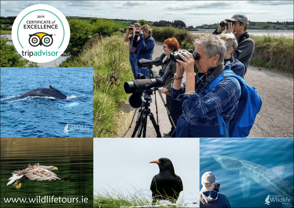 Ireland's Wildlife Certificate of Excellence